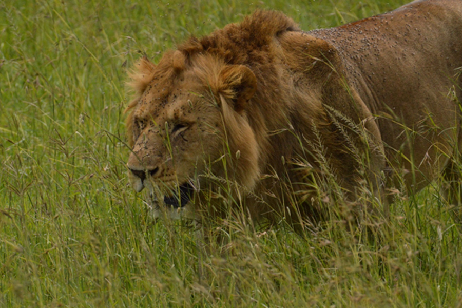 The 'Big' Safari- a trip for three generations- (1st part)